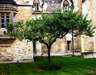 一睹牛頓蘋果樹及親臨發現生命秘密DNA之地, 感受科學探索精神