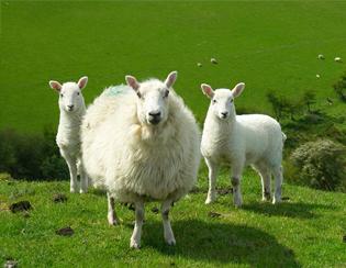 參觀英國的有機農場(Organic Farm)