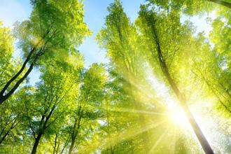 樹林伙伴生態探奇計劃